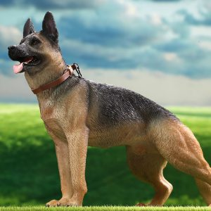 AS003 German Shepherd