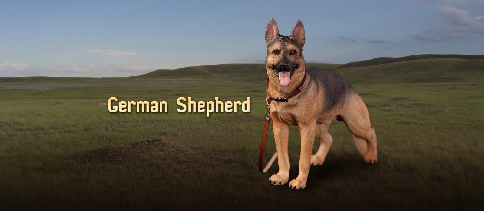 AS003 German Shepherd